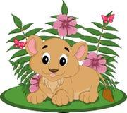 Animal de lion femelle Images stock