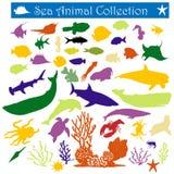 Animal de mar Fotografia de Stock Royalty Free
