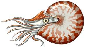 Animal de mar Imágenes de archivo libres de regalías