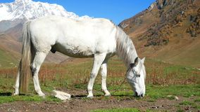 Animal de montagnes de cheval banque de vidéos