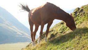 Animal de montagnes de cheval clips vidéos