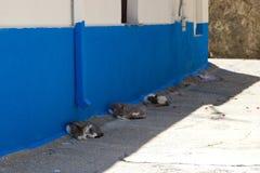 Animal de nature d'été de Cat Rhodos Greece Photographie stock libre de droits