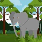 Animal de safari d'éléphant Illustration Stock