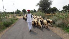 Animal de village photographie stock libre de droits