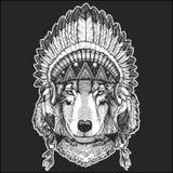 Animal de Wolf Dog Cool portant la coiffe indienne indigène avec l'image tirée par la main de style chic de Boho de plumes pour l Photos libres de droits