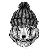 Animal de Wolf Dog Cool utilisant le chapeau tricoté d'hiver Chapeau chaud de Noël de calotte de coiffe pour le tatouage, T-shirt Image libre de droits