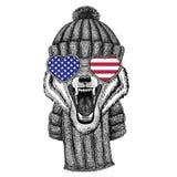 Animal de Wolf Dog Wild utilisant le chapeau et l'écharpe tricotés Photo stock