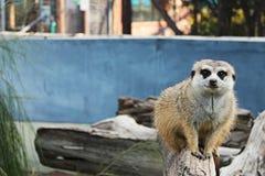 Animal de zoo Photographie stock libre de droits