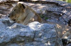 Animal de zoo - La Barben - Frances photos stock