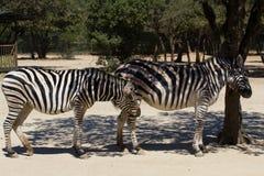Animal de zoo - La Barben - Frances photos libres de droits