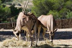 Animal de zoo - La Barben - Frances images stock