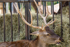 Animal de zoo - La Barben - Frances photographie stock libre de droits