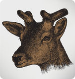 Animal deer with horns, hand-drawing Stock Photography