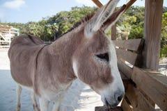 Animal del burro Imagenes de archivo