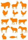 Animal del campo stock de ilustración