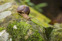 Animal del caracol de lentamente imagen de archivo libre de regalías