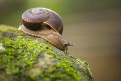Animal del caracol de lentamente imágenes de archivo libres de regalías