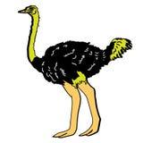 Animal del ejemplo del extracto del diseño de la historieta del icono de la bestia de las aves de corral del pájaro de la avestru Fotos de archivo