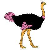 Animal del ejemplo del extracto del diseño de la historieta del icono de la bestia de las aves de corral del pájaro de la avestru Fotografía de archivo