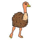 Animal del ejemplo del extracto del diseño de la historieta del icono de la bestia de las aves de corral del pájaro de la avestru Foto de archivo libre de regalías