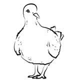 Animal del ejemplo del extracto del diseño de la historieta del icono de la bestia de las aves de corral del pájaro de la paloma  Fotografía de archivo