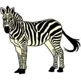 Animal del ejemplo del extracto del diseño de la historieta del icono de la bestia del caballo de la cebra Foto de archivo libre de regalías