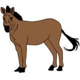 Animal del ejemplo del extracto del diseño de la historieta del icono de la bestia del mustango del caballo Imagen de archivo libre de regalías