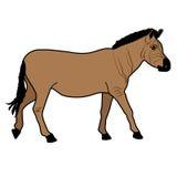Animal del ejemplo del extracto del diseño de la historieta del icono de la bestia del mustango del caballo Fotografía de archivo libre de regalías
