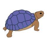 Animal del ejemplo del extracto del diseño de la historieta del icono del mar de la tortuga Fotos de archivo