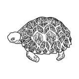 Animal del ejemplo del extracto del diseño de la historieta del icono del mar de la tortuga Imagenes de archivo