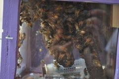 Animal del insecto de la abeja Foto de archivo libre de regalías