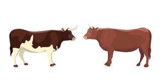 Animal del mamífero del toro del vector de la historieta aislado ilustración del vector