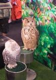 animal del pájaro del búho en fondo borroso Fotos de archivo
