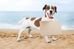 Animal del perro foto de archivo