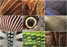 Animal details. The collage of animal details Royalty Free Stock Image