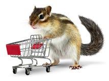 Animal divertido con el carro de la compra en blanco fotos de archivo