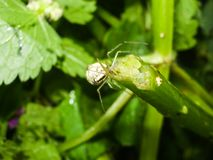 Animal do artrópode da aranha imagem de stock royalty free