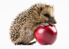 Animal do outono imagens de stock royalty free