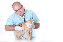 Animal doctor Stock Photography