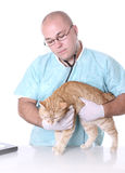 Animal doctor Stock Images