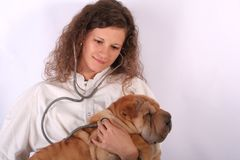 Animal doctor 5. A young animal doctor woman with sharpei dog Royalty Free Stock Images