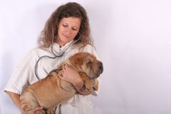 Animal doctor 7. A young animal doctor woman with sharpei dog Stock Photography