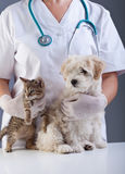 Animal doctor closeup with pets. A kitten and a small dog Royalty Free Stock Image