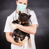 Animal doctor Royalty Free Stock Photos