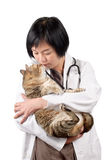 Animal doctor kiss cat Royalty Free Stock Photos