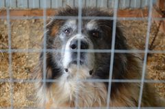Animal dog in a cage old dog Stock Photo