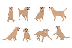 Animal dog Labrador character icon set in flat style. Design template. Stock Photography