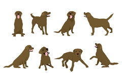 Animal dog Labrador character icon set in flat style. Design template. Royalty Free Stock Photo