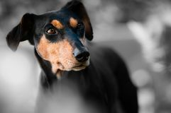 Animal, Dog, Pet, Race, Dog Snout Stock Images