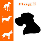 Animal dog Stock Images